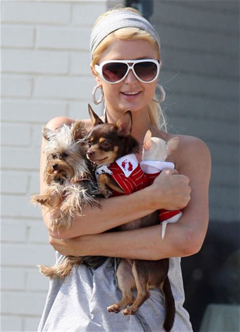 famous people who own yorkie poms celebrity dogs celebrity gossip geniusbeauty
