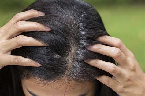10 ways to get rid of grey hair without visiting a salon top 6 home remedies to treat premature grey hair