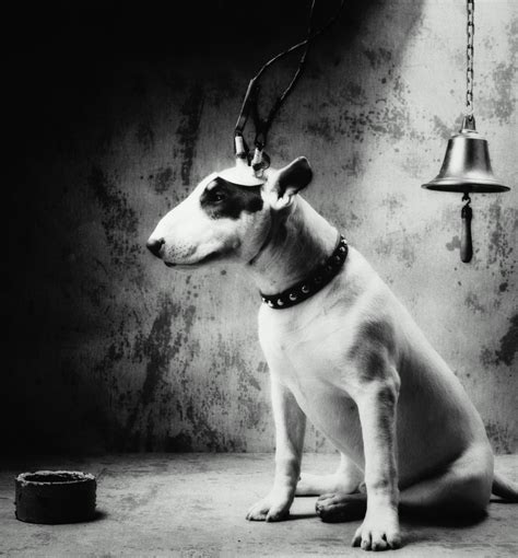 pavlov dogs pavlov s dogs the discovery of classical conditioning