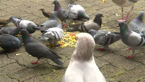 can seagulls eat bread cockroach a crumb of bread stock footage 2476487