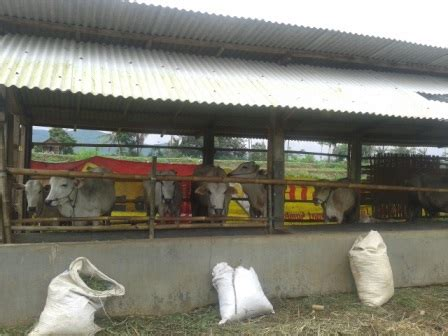 Pendidikan Rakyaat Petani spi bogor selenggarakan pendidikan peternakan sapi rakyat serikat petani indonesia