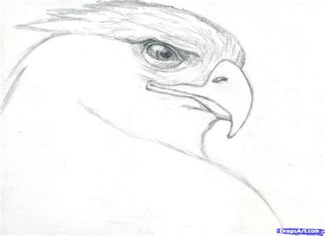 How To Draw Realistic Step By Step For Beginners how to draw realistic animals step by step for