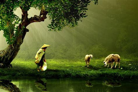 wallpaper anak gembala free photo women old shepherd nature free image on