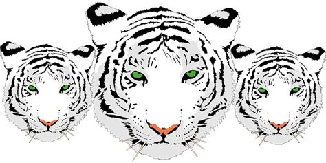 kepala harimau putih www pixshark images galleries with a bite