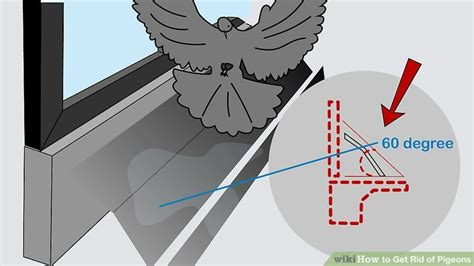 3 easy ways to get rid of pigeons wikihow