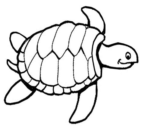 turtle coloring page free coloring pages of the turtle