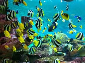 Aquascaping Reef Tank Coex Aquarium Kidsfuninseoul