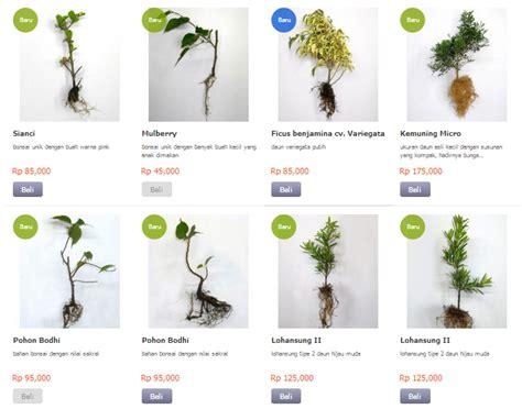 Bibit Anggrek Lazada toko tanaman hias kebunbibit toko tanaman hias