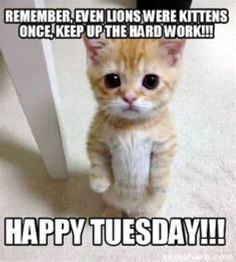 Tuesday Memes Funny - happy tuesday memes images and tuesday motivational quotes