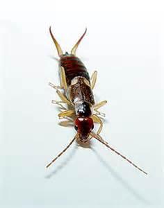 portaal insecten uitgelicht