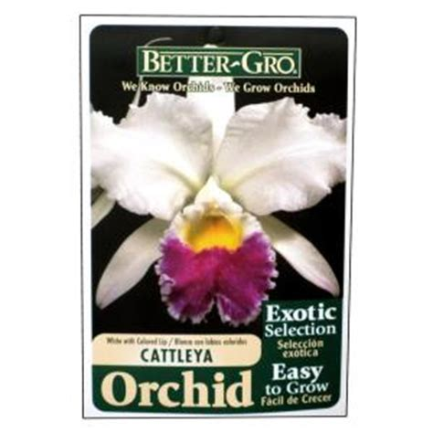 Better Gro Garden Center by Better Gro 4 In Blooming Size White With Lip Cattleya