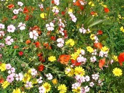 ste di fiori ostara