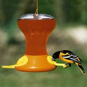 oriole bird feeder images
