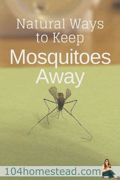 how to keep mosquitoes away in backyard best 20 keep mosquitoes away ideas on pinterest