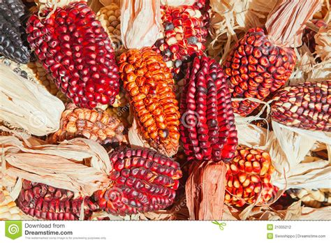 Decorative Corn by Decorative Corn Stock Photography Image 21005212