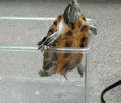 imagenes animadas gif para power point gifs animados de tortugas graciosas gifmania