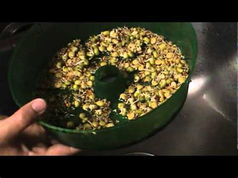 how to grow sprouts with the handy pantry sprout garden