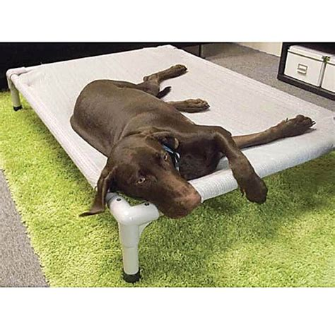 coolaroo elevated pet bed buy coolaroo 174 aluminum frame elevated pet bed small from
