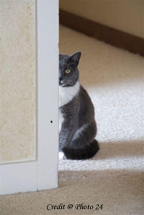 stop cat on rug cat okan get stop cat from on carpet