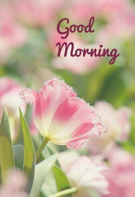 morning fiore morning con fiore immagini