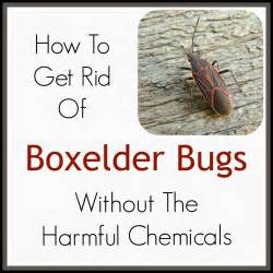 how to get rid of boxelder bugs apps directories