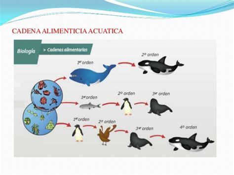 cadena trofica norte de chile imagenes de cadena alimenticia marina imagui