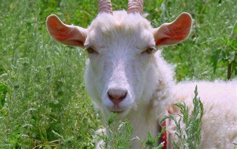 imagenes terrorificas de animales banco de im 225 genes para ver disfrutar y compartir 12