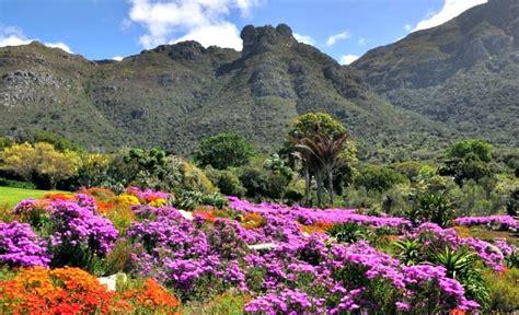 Cape Town Botanical Gardens Image Gallery Kirstenbosch Gardens Cape Town