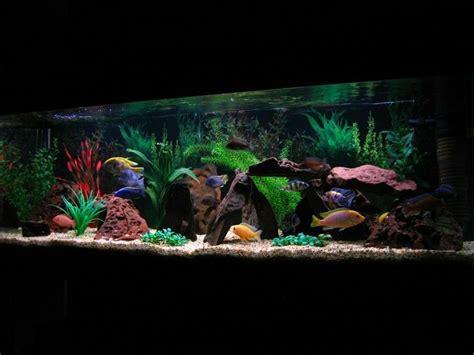 aquascaping african cichlid aquarium 17 best images about aquarium setups on pinterest african cichlids malawi cichlids