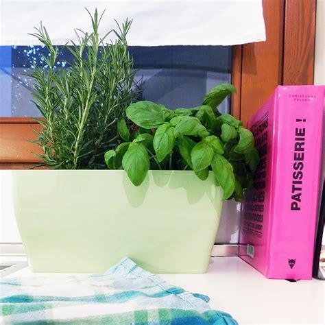 piante per cucina stunning piante per cucina pictures embercreative us