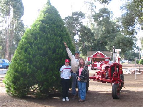 holloway s christmas tree farm in nipomo california