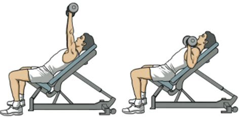 45 degree incline bench image gallery incline db chest press