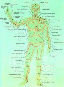 Surface anatomy of the human body front