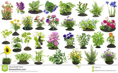 Garden Flowers A Z Garden Plants Grow In Soil Set Stock Photo Image 32881156