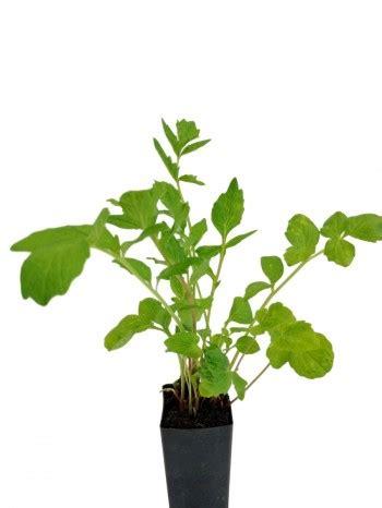 indoor plants  oxygen  sleep userspecial