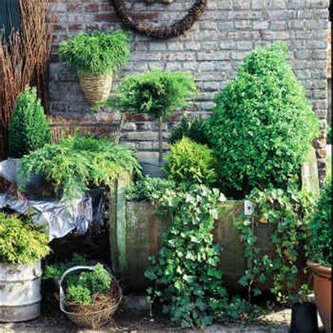 Sapin En Pot Terrasse by Petit Conif 232 Re Id 233 Al Au Jardin Ou En Terrasse Et Balcon