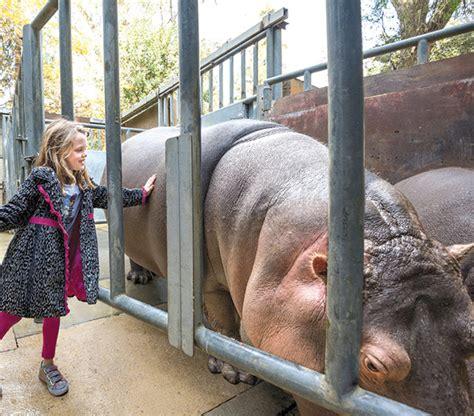 Image Gallery Los Angeles Zoo Hippo Image Gallery Lazoo