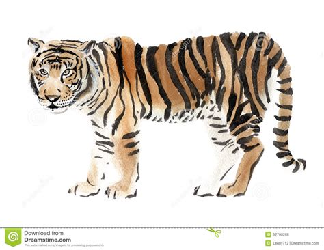watercolor illustration of a tiger stock illustration