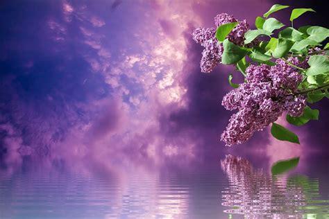 lilac bedroom ideas  pinterest color schemes