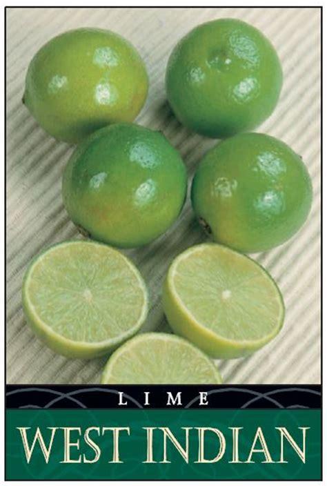 lime west indian  litre pot dawsons garden world