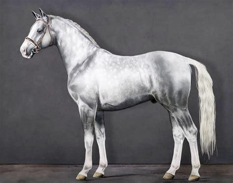 imagenes artisticas de caballos cuadros modernos pinturas y dibujos caballos pinturas