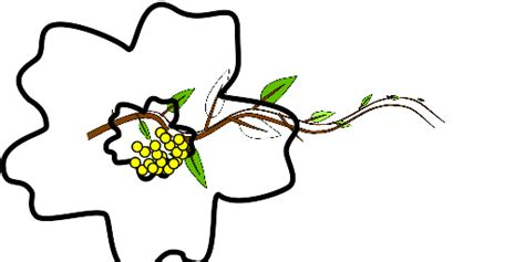 Simple Listy Black And White free horizontal vine clipart cliparts co