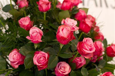 flowering shrubs  vines rose full fragrance