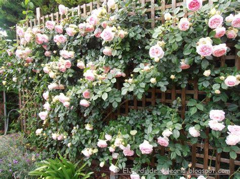 imagenes de jardines con rosales el jard 237 n de la alegr 237 a c 243 mo se podan los rosales