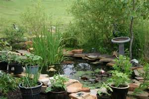 Small pond pictures