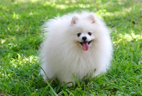 Kalung Dasi Kupu Untuk Anjing Dan Kucing 59 gambar untuk gambar gambar anjing lucu gunggung