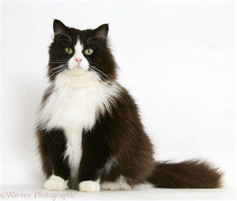 white black cat black and white cat wallpaper wallpapersafari