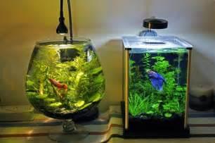 All about betta fish: Betta fish Nano Tank setup