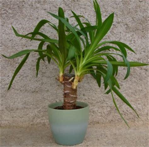 yucca jardiner avec jean paul