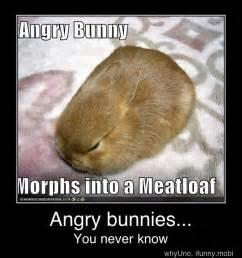 Angry Bunny Meme - 63 best bunny memes images on pinterest bunny meme